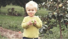 A child tastes an apple freshly picked from an apple tree on his parents' property in Beloeil.